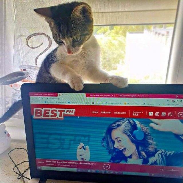 @kiraly_david_  új lakótársa Jenőke, aki még csak most ismerkedik mindennel. 😍 Az ízlése zene terén már rendben van! 😺🎶 #Jenőke #cica #ujlakotars #bestcica @jeno_the_dependable_cat